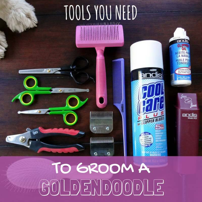 Necessary Goldendoodle Grooming Tools to Groom at Home