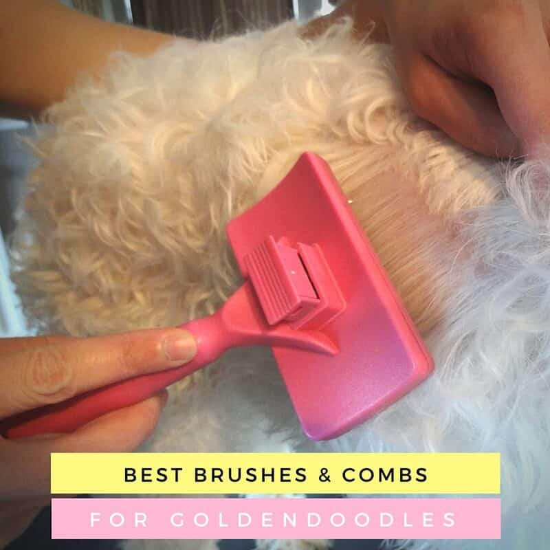 Best Brushes and Combs for Goldendoodles