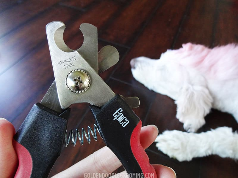 Best Dog Nail Clippers for Goldendoodles
