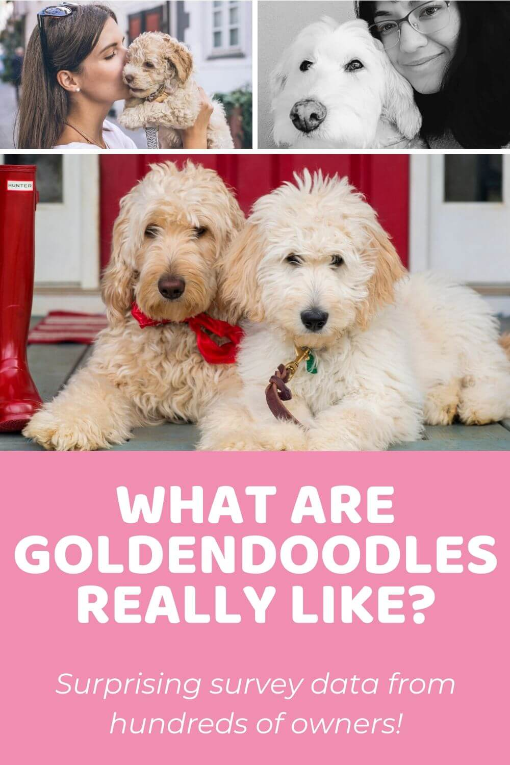 Goldendoodle Temperament 200 Goldendoodle Owners Weigh In