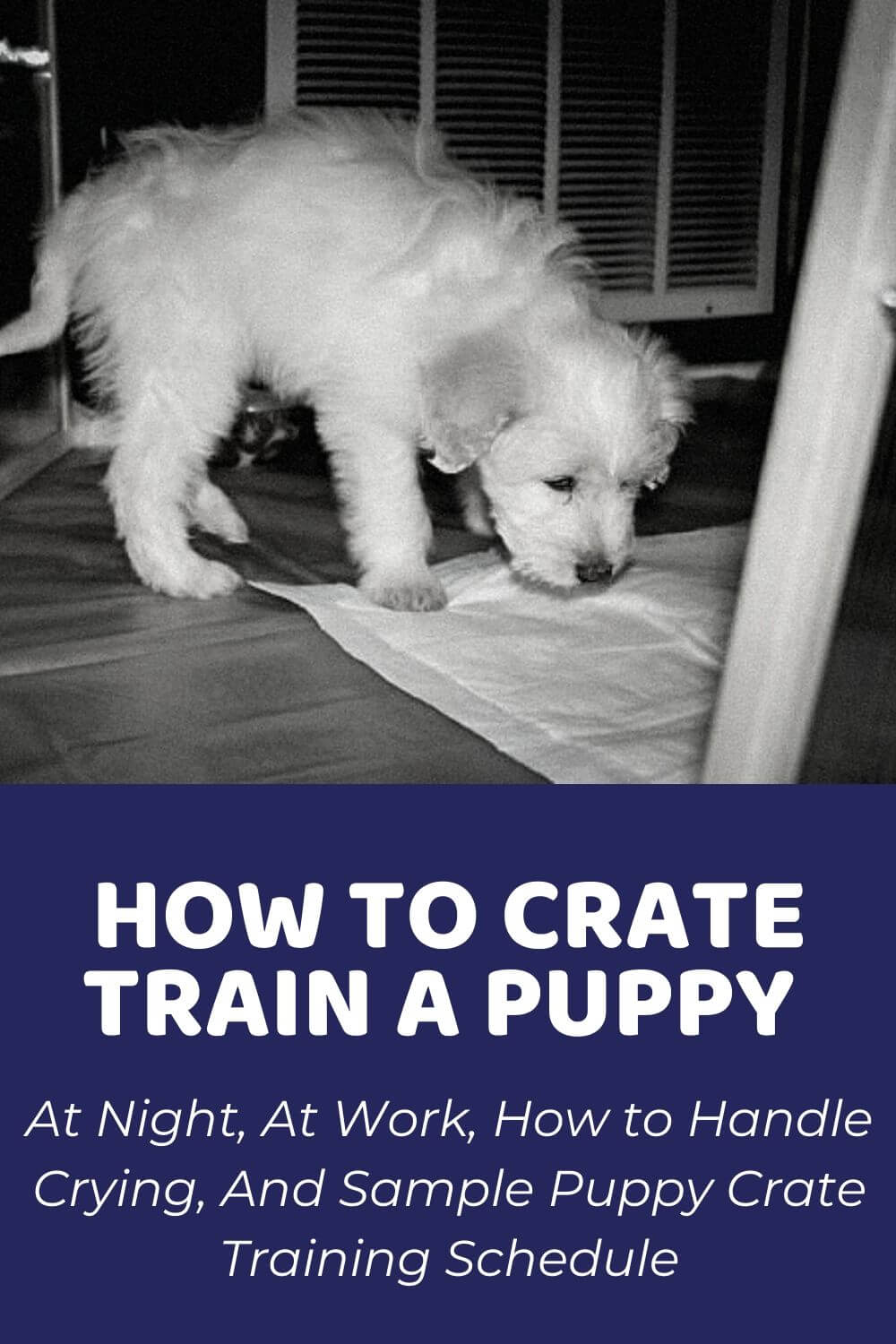 How To Crate Train A Puppy And Puppy Crate Training Schedule