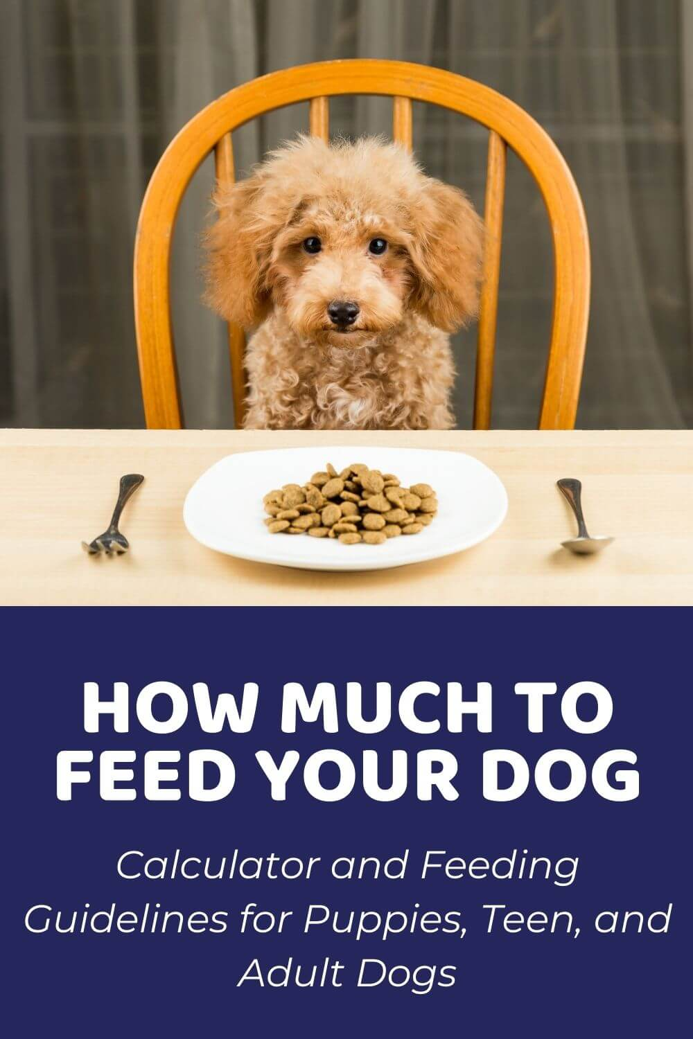 How Much Should I Feed My Dog Calculator And Feeding Guidelines