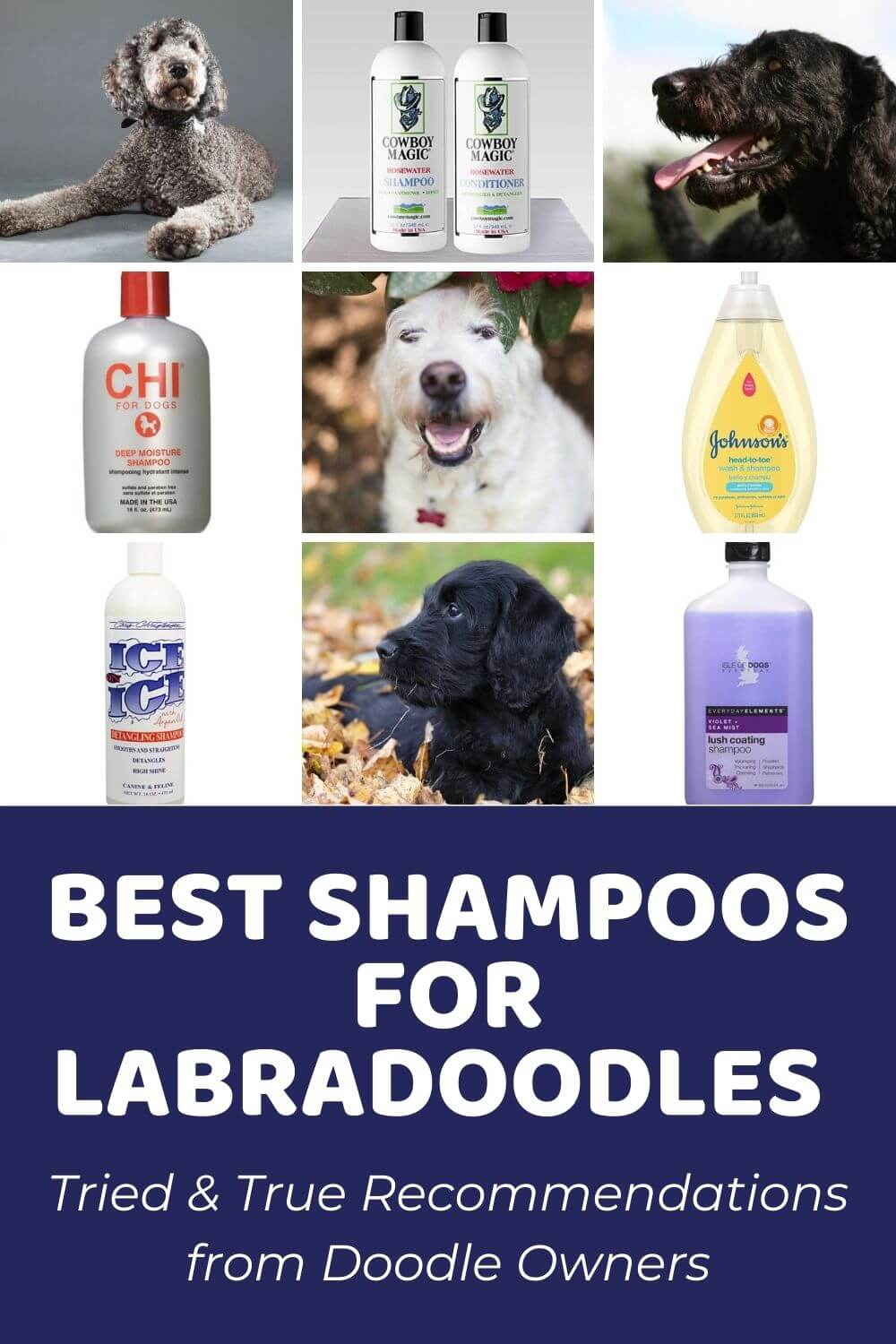 Best Shampoo For Labradoodle Tried And True Recommendations